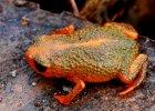 Siedem żabek z siedmiu gór