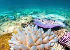 Wielka Rafa Koralowa ginie z przegrzania