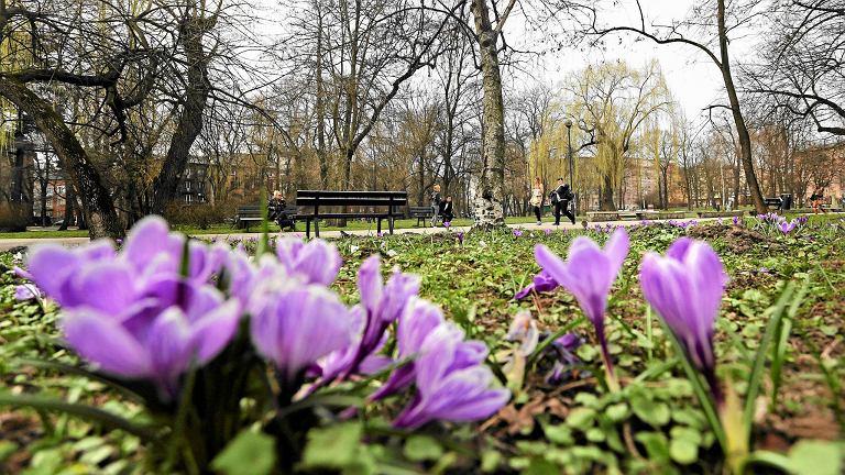 Kraków, 25 marca. Możliwe, że to falstart wiosny