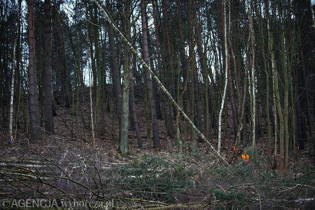 32-latek zabrał do lasu 9-letnią córkę partnerki. Później miał zgwałcić dziecko