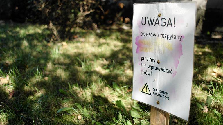 Dominikanie w Poznaniu postawili na trawniku tabliczkę: 'Rozpylany monotlenek diwodoru'. Skutecznie odstrasza właścicieli psów