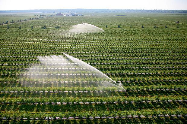 Plantacja borówek wysokich nad Tanwią