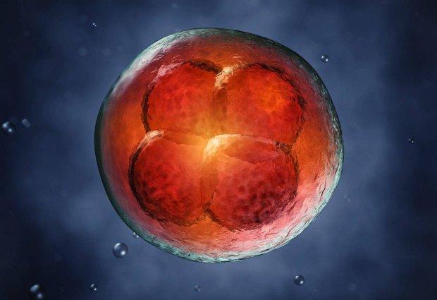 Zarodki z prob�wki