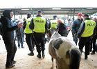 Wstępy w Skaryszewie. Obrońcy zwierząt wykupują konie. Awantury, interweniuje policja. A ze sceny: piękna tradycja [ZDJĘCIA, WIDEO]