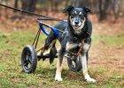Wakacje - czas pozbyć się psa? Latem porzucamy nawet 40 proc. zwierząt więcej