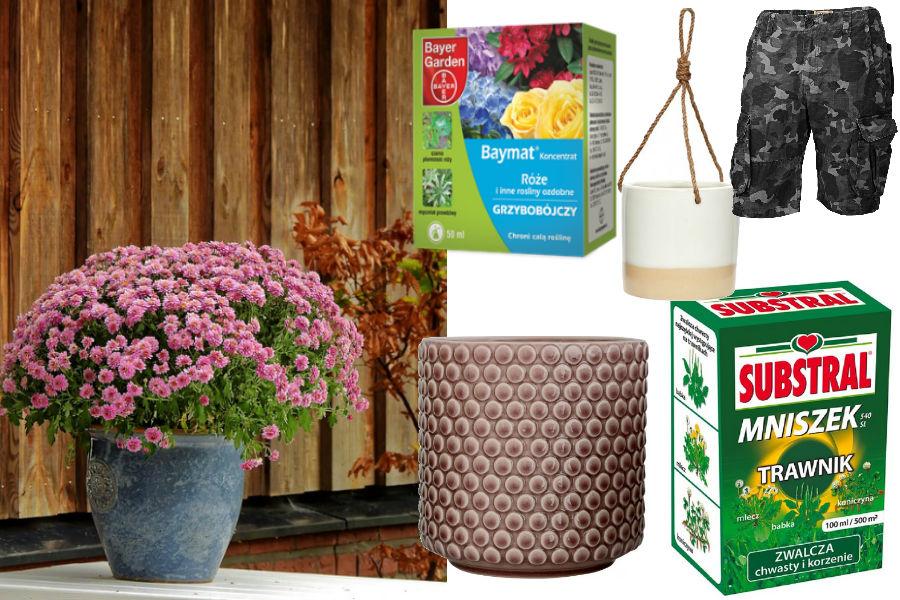 kwiaty, rośliny, donice, ogród, nawóz