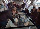 Spacer tylko dla odważnych. Szklany chodnik połączył wieże na Tower Bridge