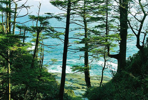 Podróże: na skraju raju czyli Kolumbia Brytyjska, ameryka północna, podróże, Na szlaku rozbitków West Coast Trail co chwila zza drzew pokazuje się ocean.