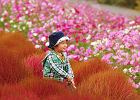 Czerwona pla�a, otw�r w ziemi, gdzie stale pali si� ogie�, jaskinia 12-metrowych kryszta��w - wiesz o jakich miejscach mowa? S� niesamowite, dziwne i wprawi� Ci� w zachwyt. // Kwiatowy park Hitachi - Japonia. Pola tulipan�w w Holandii pewnie wielu z Was ju� mia�o okazj� zobaczy�. R�wnie pi�kny, jak nie pi�kniejszy, ton�cy w kwiatach na powierzchni 190 hektar�w ogr�d mo�na podziwia� we wschodniej cz�ci wyspy Honsiu. Co roku o r�nych porach, od wiosny do jesieni, kwitnie tu kilka milion�w ro�lin, tworz�cych zjawiskowe dywany m.in. �onkile i tulipany