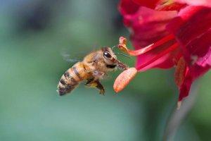 Wielkie pytania ma�ych ludzi: Jak pszcz�ka macha skrzyde�kami?