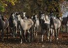 Stadnina w Michałowie wystawia na przetarg 22 konie. Także te, które nie poszły na aukcji Pride of Poland