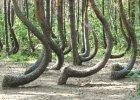 Kto odkryje tajemnic� Krzywego Lasu