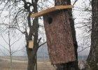 Ekolodzy zachęcają do kupowania desek. Zbudują z nich budki lęgowe dla ptaków