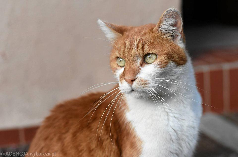 Kot Dante Ma Następcę To Jego Rudy Brat Wideo Zdjęcia Zdjęcie