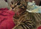 Kotek znaleziony przez poznańską straż miejską