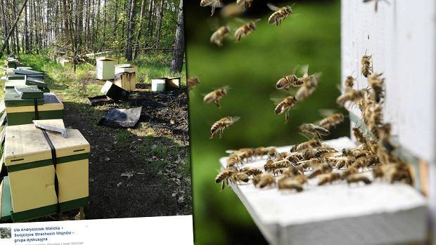 Ktoś wlał podpałkę pod ule i podłożył ogień. Zginęło pół miliona pszczół. Trwa zbiórka