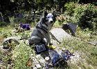 Pomysł na biznes: Cmentarz dla zwierzaków. I krematorium