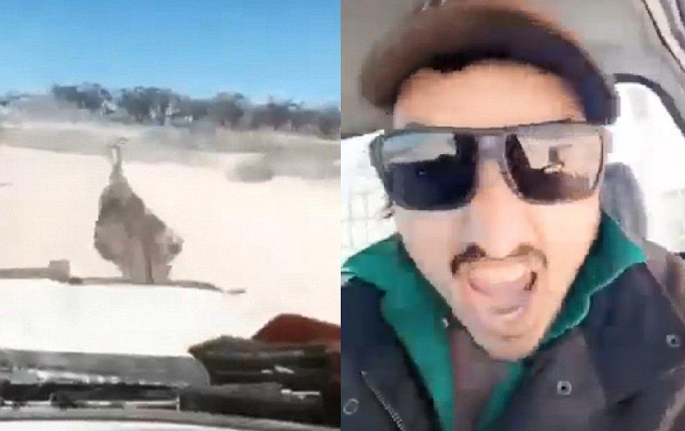Australia - mężczyzna rozjeżdża grupę emu samochodem