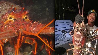Noc� wyp�yn�li na ryby, ale w ich sie� z�apa�o si� co� innego. Waga: 11 kilogram�w
