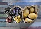 Kolorowe ziemniaki - ��te, fioletowe i purpurowe
