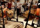 Cierpienie zwierząt w muzeum. Trzy eksponaty wycofane z Muzeum Guggenheima