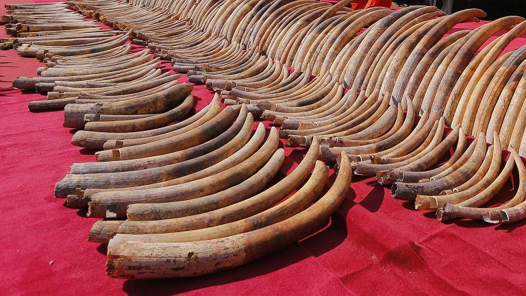 Kość słoniowa
