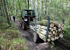 Przy�apani na nielegalnej wycince dalej pracuj� w Lasach Pa�stwowych