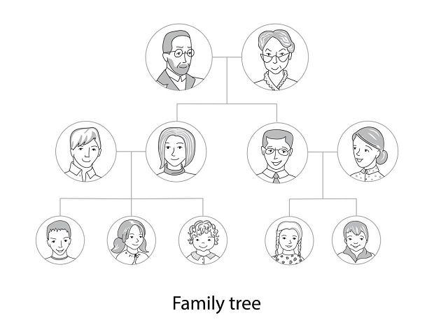 Drzewo genealogiczne: jak wygląda, jak zrobić? [PODPOWIADAMY]