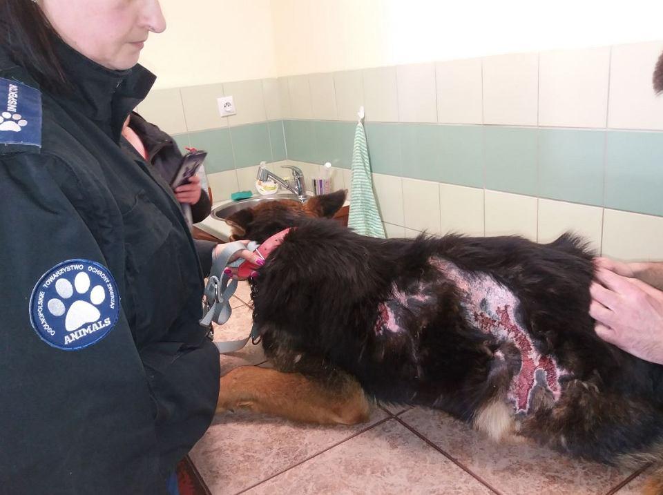 Jeden z psów odebranych mieszkańcowi gminy Bodzanów