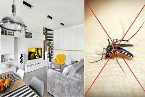 Owady i gryzonie - jak pozbyć się nieproszonych gości z mieszkania