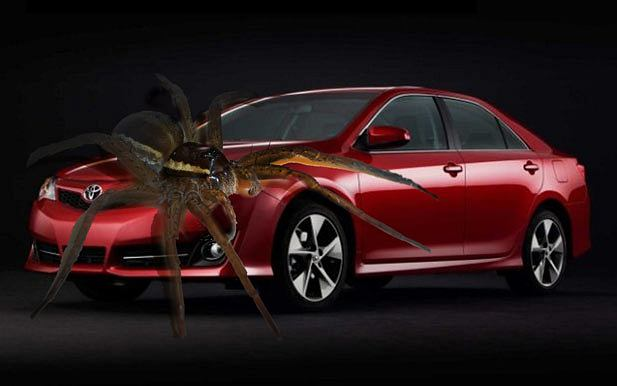 Pająki zmusiły Toyotę do serwisowania 800 tys. pojazdów