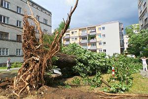 Ofiary, tysiące połamanych drzew, wiele zablokowanych dróg - tragiczny bilans nawałnic nad Polską.
