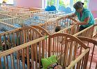 Co sk�oni Polak�w do posiadania dzieci? ��obki najwa�niejsze