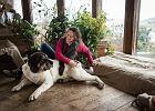Psy nauczą nas komunikacji, współpracy - owady błonkoskrzydłe, koty - sensu życia