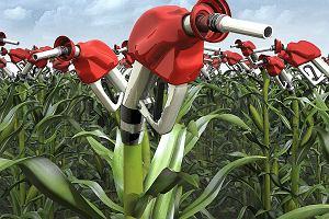 Biopaliwa. Czy w przyszłości będziemy jeździli autami na pieluchy i czekoladę?