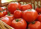 Smaczne i tanie pomidory w lutym? Być może właśnie staje się to możliwe