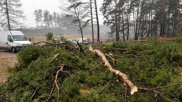 Wycinki drzew w rejonie jeziora Ukiel w Olsztynie, które stały się możliwe dzięki prawu ministra Jana Szyszki