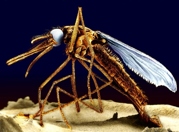 Jak si� nie da� komarom. Sposoby, kt�re pomog� unikn�� pogryzienia