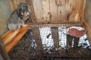 Znęcał się nad 126 psami, ale prokurator uważa, że rokuje dobrze