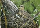 Szkicownik szwajcarski. Z ołówkiem na ptaki niebieskie [WAJRAK]