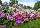 Jak zapewnić długie kwitnienie kwiatów ogrodowych?