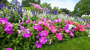 Ogród pełen kolorowych azali