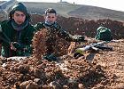 Kurd Kurdowi wilkiem