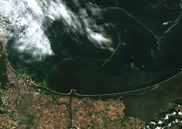 Sinice w Bałtyku na zdjęciach satelitarnych. Bakterie są ...