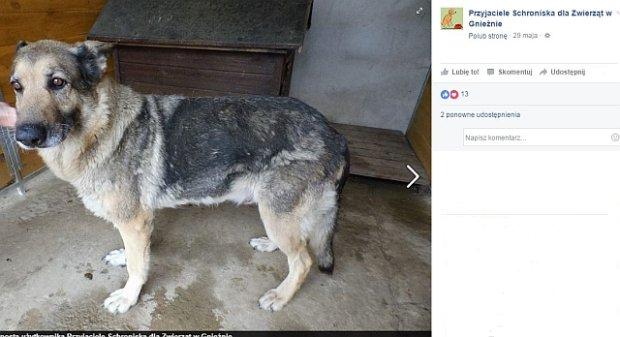 Ten pies zachował się po bohatersku. Uratował innego czworonoga przed śmiercią