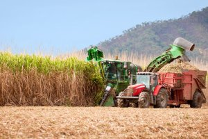 Biopaliwa nie uratuj� �wiata. Wr�cz przeciwnie