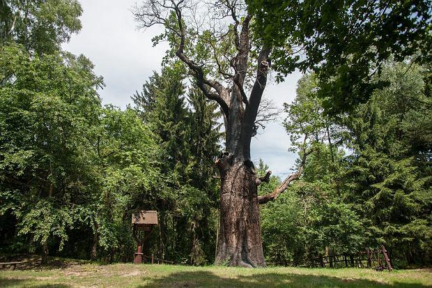 Szlakiem magicznych drzew