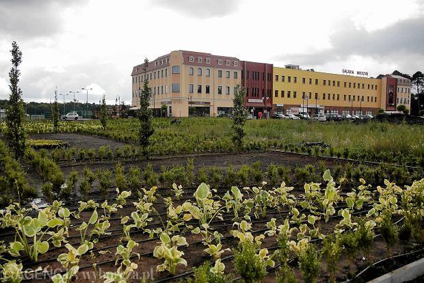 Zdjęcie numer 0 w galerii - Ogród nad Kanałem Bydgoskim. 20 tysięcy roślin [ZDJĘCIA]