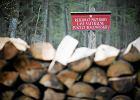 """Pilarz w Puszczy Białowieskiej zginął przez """"klęskę kornika"""". Lasy Państwowe wydały oświadczenie"""