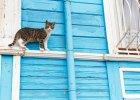 Jak pies z kotem. Co robią koty, kiedy ich nie ma?